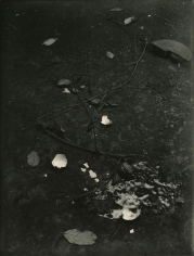 Josef Sudek - Untitled (Still life with Branches and Broken Egg), c. 1950-54 | Bruce Silverstein Gallery