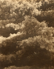 Paul Strand - Connecticut Pines, 1925 | Bruce Silverstein Gallery