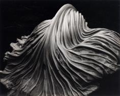 Edward Weston- Cabbage Leaf, 1931 Gelatin silver print mounted to board, printed c. 1951-52 | Bruce Silverstein Gallery