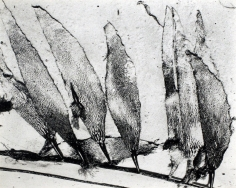 Edward Weston- Seaweed, Carmel Beach, 1930 Gelatin silver print mounted to board, printed c. 1951-52 | Bruce Silverstein Gallery