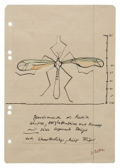 """""""Crane Fly as a sculpture. Very large, wooden slat legs and body, wings covered with silk. Also butterflies, giant wings"""", ca. 1968"""