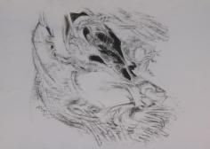 Elias Zayat,Study, 2014, Charcoal on paper, 50 x 70 cm