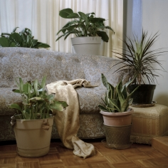 Christie Neptune  Drapery and Plants in Grandma's Living Room, 2019  Digital chromogenic print  30 x 30 inches