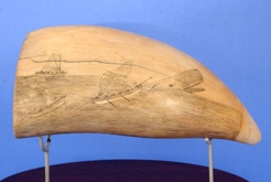 Scrimshaw Whales Tooth with Image of Three whale Boats Pursuing a Whale