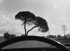 Joel Meyerowitz: European Trip: Photographs from the Car, 1968