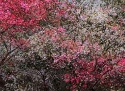 SHOJA AZARI & SHAHRAM KARIMI: THE COLD EARTH SLEEPS BELOW