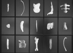 Anatomy Lesson - Moose, 2006