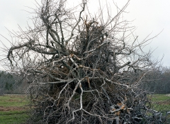 Orchard, 2010