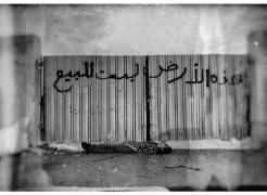Aiham Dib