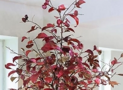 Maria Pergay: Secret Garden featured in video by Artinfo