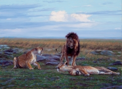 P.R.I.D.E. Kenya Wildlife Trust- Mara Lion Project