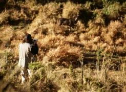 Mountain Nyala Inititative