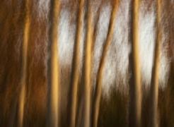 Le Pays Des Jardins Des Fantasmes, Solo Photography Exhibition