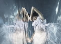 Barbara Cole | Submerged