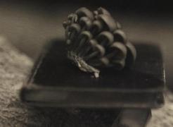 Victor Schrager: Botany