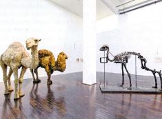 Mancy Graves: Ludwig Forum für Internationale Kunst