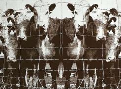 Annette Lemieux: Paul Kasmin Gallery