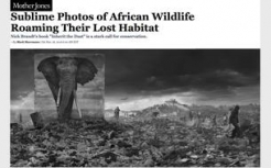Nick Brandt in Mother Jones