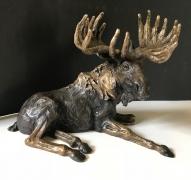 Fish Creek Moose