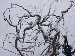 Roxy Paine: Ferment and 'Scumaks and Dendroids'