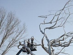 Roxy Paine: Yield at Crystal Bridges Museum of American Art