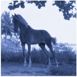 vieques horse portraits, David Krueger, DG Krueger, Test prints