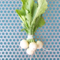 Baby White Turnips