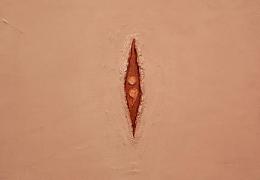 The Visible Vagina