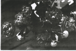 Wolfgang Tillmans, dark peonies