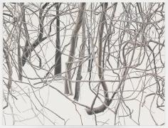 Toba - Branches