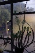 Wolfgang Tillmans - Conor plant, dusk