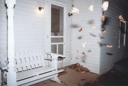 Falling Leaves, 2001, c-print