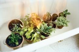 Plants, 2009 c-print