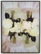 White Rose Romeo, 2011, Inkjet photographs mounted on drywall, framed
