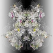 A Momentary Configuration of Matter #7, 2007, Lambda print on Fujiflex paper, mounted on plexi