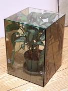 Too Soon (Silver Queen), 2009, glass, 2-way mirror, rug, plant, plexiglass