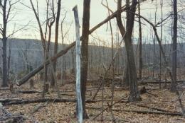 Leaning Tree, 2004, c-print
