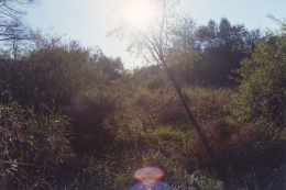 Leaves and Grass, 2002, c-print