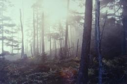 Brunswick Forest, 2004, c-print