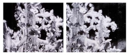 Parnassus, 2003, graphite on paper (in two parts)