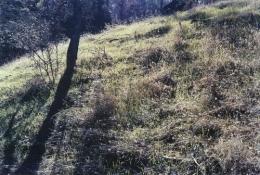 Hillside, 2004, c-print