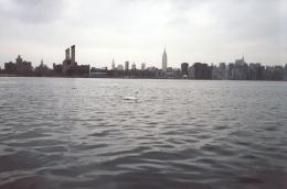 NYC Swan, 2002, c-print