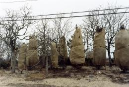 Shrouded Trees, 2004