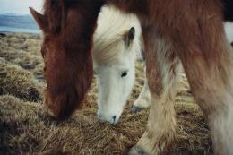 Horses,2006, c-print