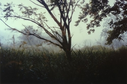 Night Tree, 2004, c-print