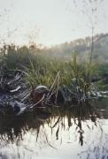 Ground Duck, 2004, c-print