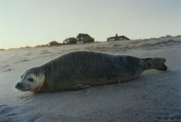 Seal, 2004, c-print