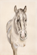 Lucian Freud, A Filly, 1969