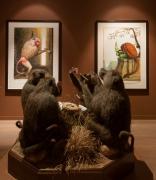Installation view,Walton Ford,Musée dela Chasse et de la Nature, Paris, 2015