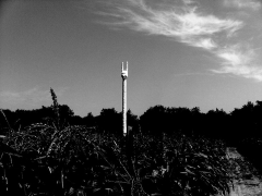 Installation view, Terence Koh,Children of the Corn,Long Island, 2010